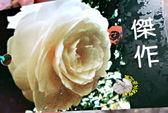 [傑作茶花苗] 3吋 新品種觀賞茶花盆栽 活體花卉盆栽 半日照 需換盆才會比較快開花