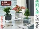 透明可視水培花盆 自動吸水 可儲水 土培盆 水耕栽培 綠化裝飾盆栽 辦公桌盆栽 雙層培養盆