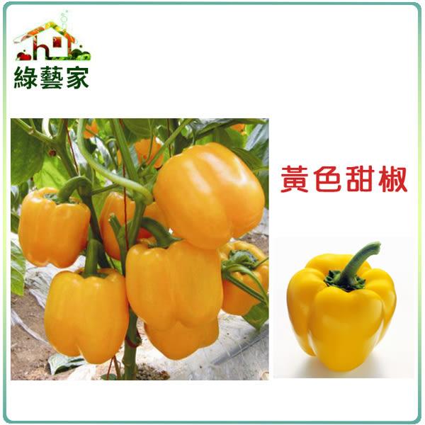 【綠藝家】大包裝G24.黃色甜椒 (金華星)種子20顆