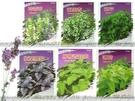 【FC410】各種香草種子:紫葉羅勒/歐...