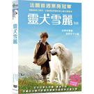 靈犬雪麗DVD...