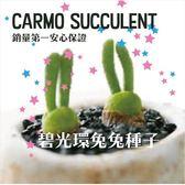 ⓒ銷售冠軍👑多肉植物兔斯基碧光環盆栽套組【G52】