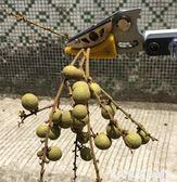 摘果器高枝剪鋸樹枝摘果剪刀園藝高空果樹修枝剪摘果器伸縮高枝剪采果器igo艾家生活館