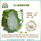 【綠藝家】G14.南瓜種子20顆