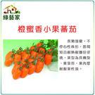 【綠藝家】大包裝G73.橙蜜香小蕃茄種子...