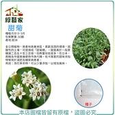 【綠藝家】大包裝K18.甜菊種子30顆
