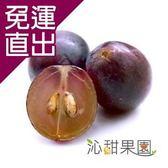 沁甜果園SSN. 新社古家御品巨峰葡萄(2.5公斤/箱)【免運直出】