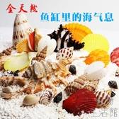 魚缸裝飾貝殼天然海螺貝殼魚缸造景造景水族箱擺件【極簡生活】