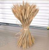 干花小麥稻穗天然麥穗真正麥子大麥雜糧櫥窗農家樂裝飾拍攝道具 星河光年DF