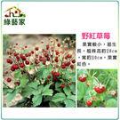 【綠藝家】I07.野紅草莓種子(英國進口...