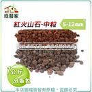 【綠藝家】紅火山石-中粒5~12mm(1...