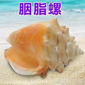 魚缸擺件 天然海螺貝殼胭脂螺 家居櫥窗擺件 魚缸水族造景裝飾 魚缸造景   非凡小鋪igo