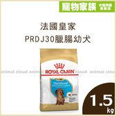 寵物家族-【活動促銷】法國皇家PRDJ30臘腸幼犬1.5kg