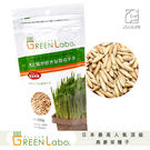 GreenLabo 日本燕麥貓草 種子包