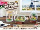 【拉拉熊環遊世界盒玩】拉拉熊 世界旅行 盒玩 擺飾 一組 Re-ment 日本正品 該該貝比日本精品 ☆