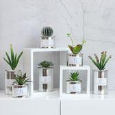 仿真多肉植物小盆栽家居北歐創意客廳辦公室綠植裝飾品擺件  LVV8832【雅居屋】TW