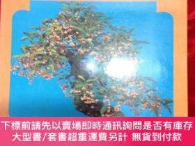二手書博民逛書店小品盆栽罕見陳蘇編著 (1979年11 月版)Y218601 陳蘇 萬裏書庀 出版1979
