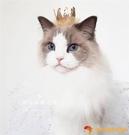 貓咪皇冠寵物頭飾蕾絲發夾狗狗生日裝飾拍照裝扮飾品帽子【小獅子】