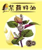 雪菲紫蘇籽油 omega-3 軟膠囊優惠組 (500mg*60顆/瓶,共四瓶)超臨界常溫萃取 精純不氧化 雪菲網精選