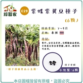 【綠藝家】E23.紫蝶紫翼豆種子6顆