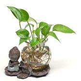 陶瓷花盆 綠蘿花盆玻璃花瓶透明桌面創意小和尚禪意擺件插花 莎瓦迪卡