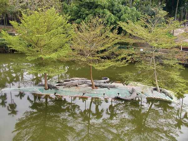 [屏東]不一樣鱷魚生態休閒農場-精緻單人田園美食一日遊(合作至2019年2月28日止)
