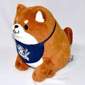 40cm 可愛柴犬 忠犬もちしば 米店的柴犬 日本帶回正版商品