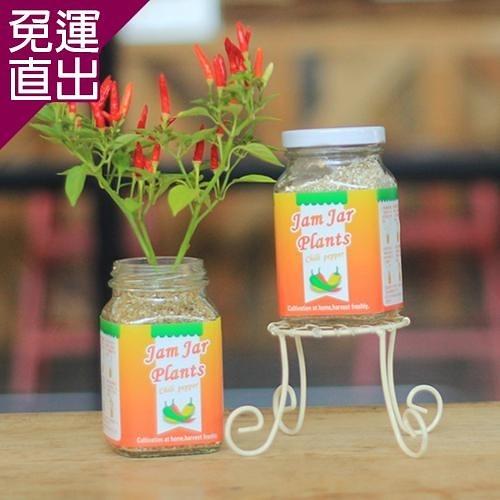 迎光 Jam Jar Plants果醬小植栽五彩辣椒【免運直出】