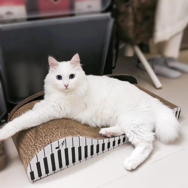 貓抓板大號瓦楞紙貓窩磨爪器耐磨貓爪貓用沙發防貓抓玩具貓咪用品