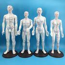 男 女性人體針灸模型 經絡穴位模型反射區...