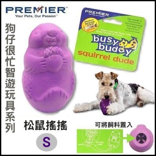 *WANG*美國美國Premier 普立爾-狗仔很忙智遊玩具《松鼠搖搖》S號