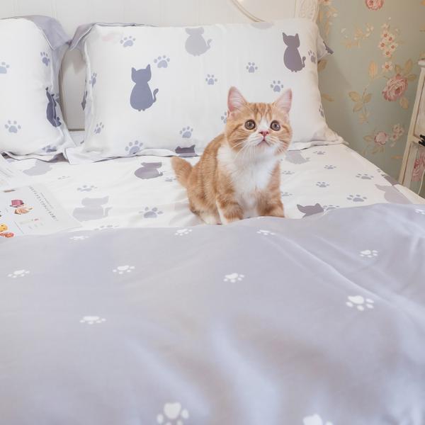 天絲床組 紫色貓月 Q4雙人加大薄床包與兩用被四件組(40支)  100%天絲 棉床本舖