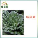 【綠藝家】A39.塔菇菜種子800顆(日...