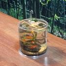 創意圓柱形桌面魚缸小型烏龜缸帶曬臺爬蟲飼養盒透明亞克力造景箱 小山好物