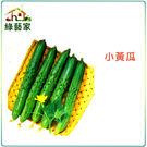 【綠藝家】G11.小黃瓜種子30顆...