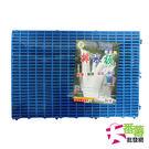 【台灣製】30x45浴室組合排水板/防滑...