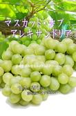 【果之蔬-全省免運費】日本長野溫室麝香葡萄【約10串/約3.5公斤原箱】