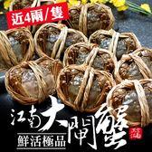 送蟹工具組[屏聚美食] 肥美鮮活江南大閘蟹8隻組(4兩上/隻)