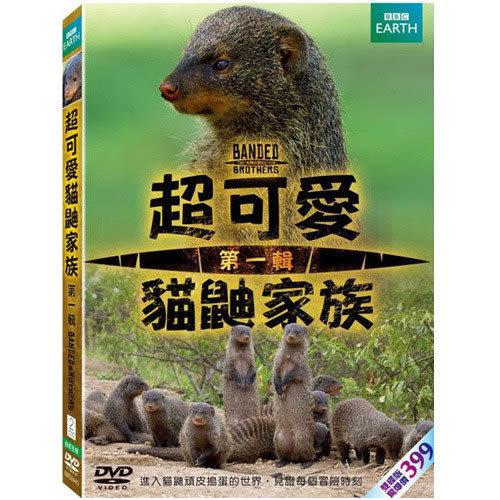 超可愛貓鼬家族DVD (01) (購潮8)