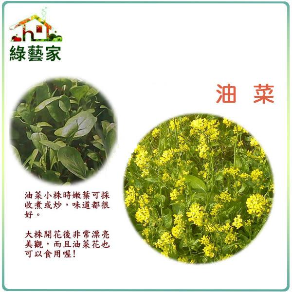 【綠藝家】大包裝A16.油菜種子450克(約19萬顆)