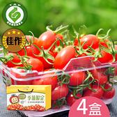 產銷履歷-百分百甘ㄚ蜜-玉女小蕃茄4台斤含運組