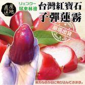【果之蔬-全省免運】屏東子彈蓮霧X1盒(12顆/盒 每顆約80g±10%)