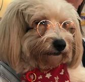 寵物小眼鏡圓形寵物墨鏡金屬鏡框寵物墨鏡小貓小狗潮流裝飾眼鏡 小宅女大購物