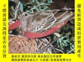 二手書博民逛書店AUSTRALIAN罕見BUSH BIRDS IN COLOUR