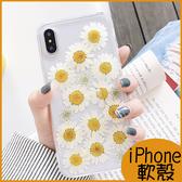 小清新雛菊 iPhone8 Plus手機殼 iPhone7保護殼 iPhone6軟殼 iPhoneXR全包邊透明殼iX軟殼XS Max