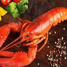 【愛上新鮮】加拿大熟凍波士頓龍蝦3隻(325g/隻)
