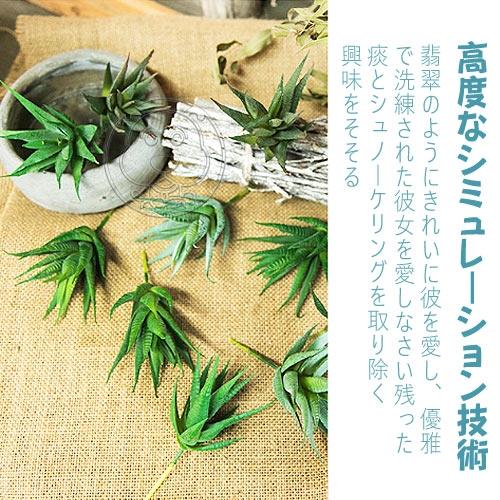 【培菓平價寵物網】仿真多肉植物條紋蘆薈