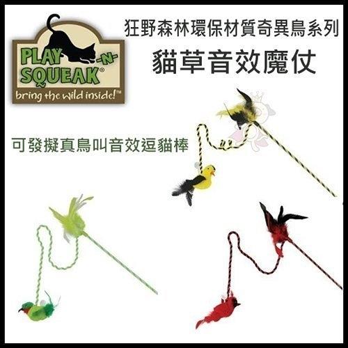 *King Wang*Play-N-Squeak狂野森林環保材質奇異鳥系列貓草音效魔仗/可發擬真鳥叫音效逗貓棒