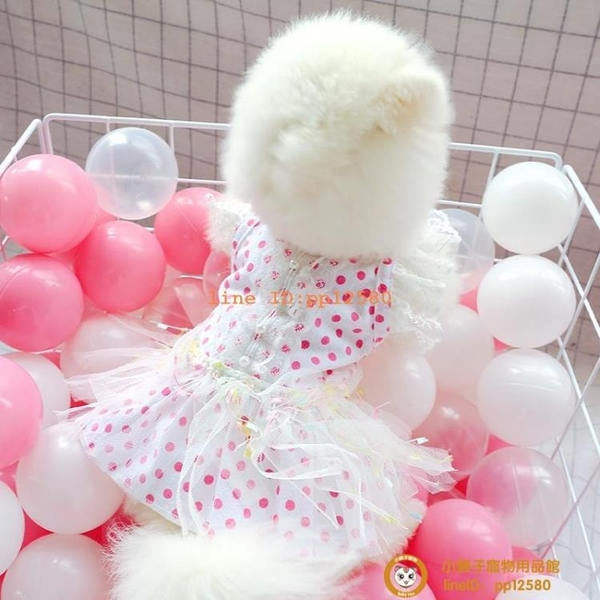 寵物泰迪比熊貴賓幼犬貓咪狗狗衣服春夏薄款公主點點連衣裙子博美小型犬小狗狗【小獅子】