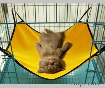 貓吊床  透氣的貓吊床 貓籠吊床 寵物貓咪吊床窩貓跳台【快速出貨八折搶購】